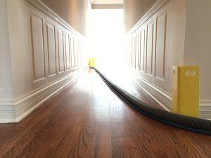 Clean Carpets Oswego IL
